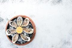 Fresh oysters in a plate of ice and lemon. Seafood. Top view. Free copy space stock photos