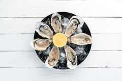 Fresh oysters in a plate of ice and lemon. Seafood. Top view. Free copy space royalty free stock photos