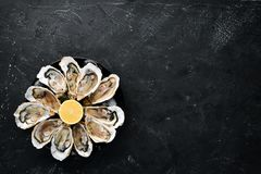 Fresh oysters in a plate of ice and lemon. Seafood. Top view. Free copy space stock images