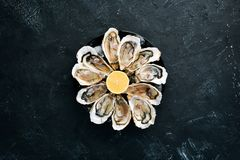 Fresh oysters in a plate of ice and lemon. Seafood. Top view. Free copy space royalty free stock photography