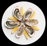 Fresh oysters on plate with lemon Royalty Free Stock Photography