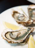 Fresh oysters on plate with lemon Stock Image