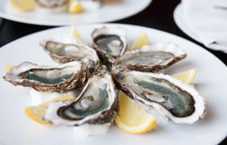 Fresh oysters on plate with lemon Stock Photos