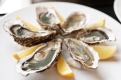 Fresh oysters on plate with lemon Royalty Free Stock Photo