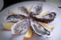 Fresh oysters on plate with lemon Stock Photo