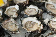 Fresh oysters plate served cold Royalty Free Stock Images