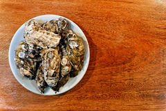 Fresh oysters plate top view Stock Images