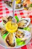 Fresh oysters Royalty Free Stock Images
