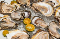 Fresh oysters platter at the seafood restaurant royalty free stock images