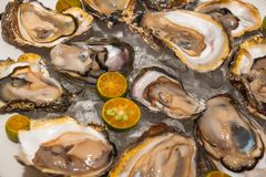 Fresh oysters platter at the seafood restaurant stock photo