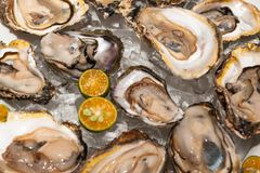 Fresh oysters platter at the seafood restaurant royalty free stock photos