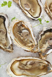 Fresh oysters platter served in ice Stock Images