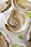Fresh oysters platter served in ice Stock Photos