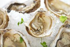 Fresh oysters platter served in ice Stock Photo