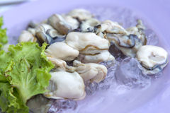 Fresh oysters ready to serve Royalty Free Stock Images