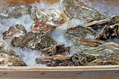 Fresh oysters for sale. Fresh oysters on ice for sale Royalty Free Stock Photo