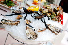 Fresh oysters and seafood. Decorated in a bowl of ice Stock Images