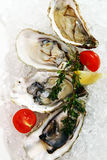 Fresh oysters served on ice Stock Photos