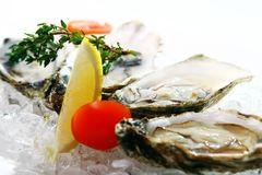 Fresh oysters served on ice Royalty Free Stock Images
