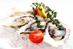 Fresh oysters served on ice Stock Photo