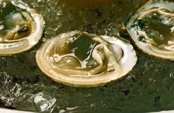 Fresh oysters in shells on ice Royalty Free Stock Photography