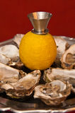 Fresh oysters in a silver plate with lemon Stock Images