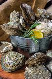 Fresh Oysters. Fresh Oysters with sliced lemon in Ice buckets Stock Images