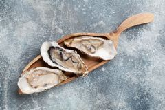 Fresh oysters Stock Photography
