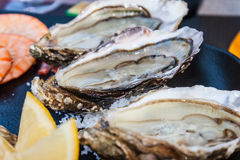 Fresh oysters straight from the sea to market in France. Stock Images
