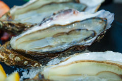 Fresh oysters straight from the sea to market in France. Royalty Free Stock Image