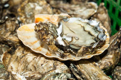 Fresh oysters straight from the sea to market in France. Stock Image