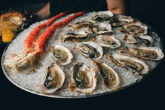 Fresh oysters in a white plate with ice. Luxury Stock Photos