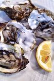Fresh oysters in a white plate with ice and lemon royalty free stock image
