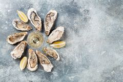 Fresh oysters and white wine. On stone table. Top view with space for your text Royalty Free Stock Photography