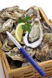 Fresh oysters in wooden basket Royalty Free Stock Photography