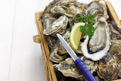 Fresh oysters in wooden basket Stock Photo