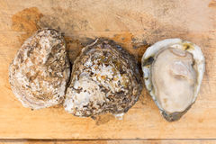 Fresh oysters on wooden board Stock Photo