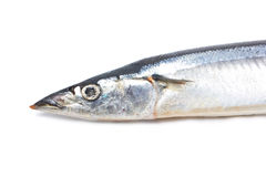 Fresh Pacific Saury. Stock Images