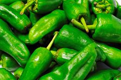Fresh padron peppers. Stock Image