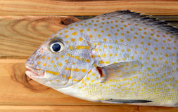 Fresh painted sweetlip fish from market. On wood in sunlight Stock Photos