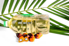 Fresh Palm Oil seeds Stock Images