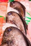 Fresh palometas. Group of fresh palometas  array for sell sea food market Royalty Free Stock Photo