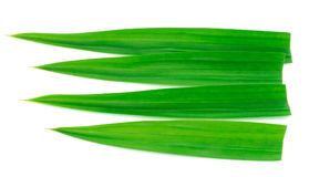 Fresh Pandan leaves on white background Stock Photography