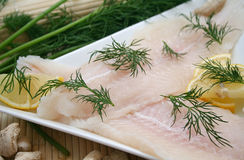 Fresh pangasius fish Royalty Free Stock Photos
