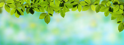 Fresh panoramic leaves Stock Photography