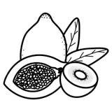 Fresh papaya with kiwi fruits royalty free illustration