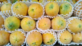 Fresh papayas Stock Image