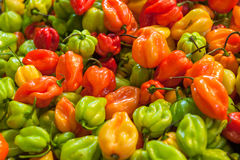 Fresh paprika at the Central Market Hall in Budapest, Hungary Stock Photography