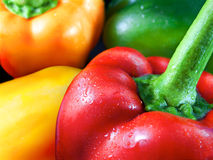 Fresh Paprika Peppers Stock Images