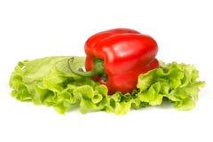 Fresh paprika on a salad leaf. Stock Images